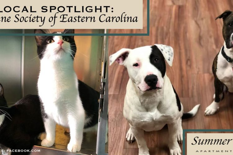 Local Spotlight: Humane Society of Eastern Carolina